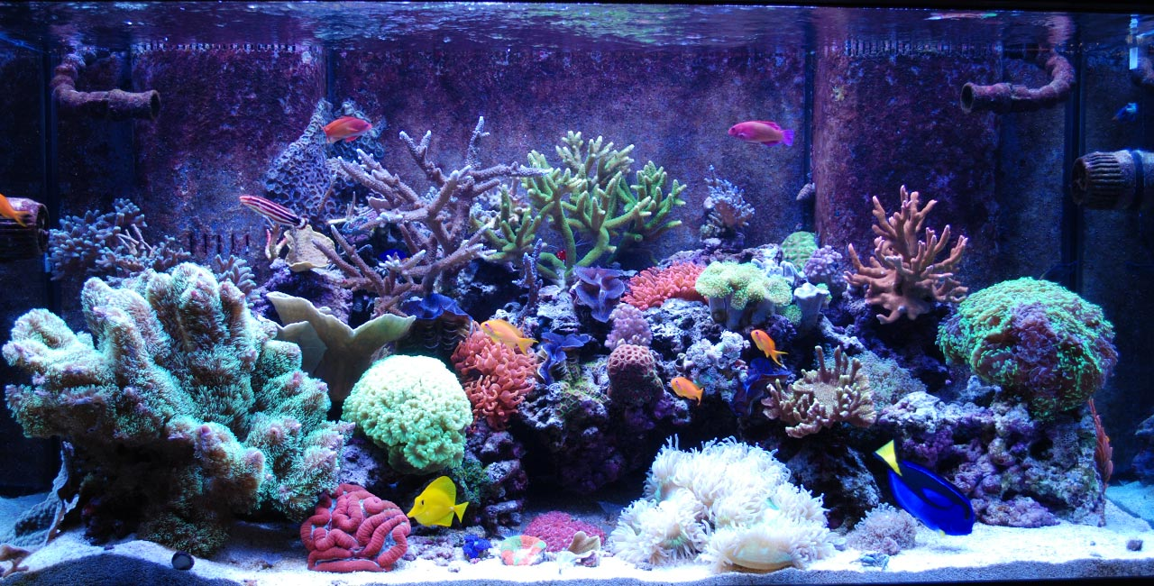 Premier Fish Amp Reef Denver S Leading Aquarium